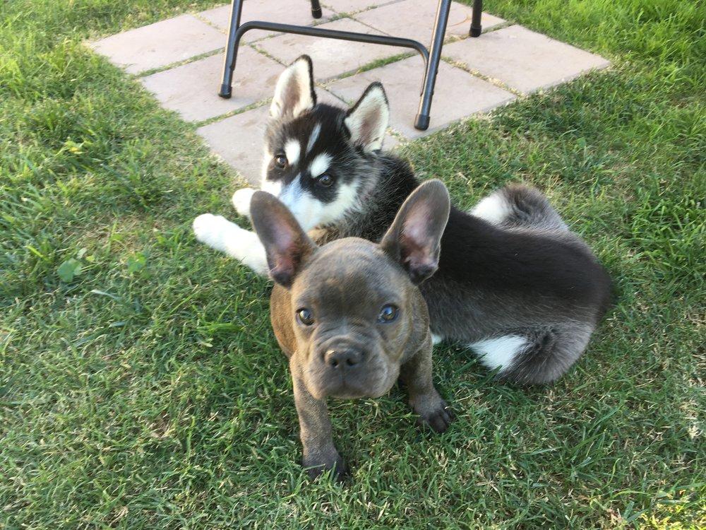 Puppy Day School