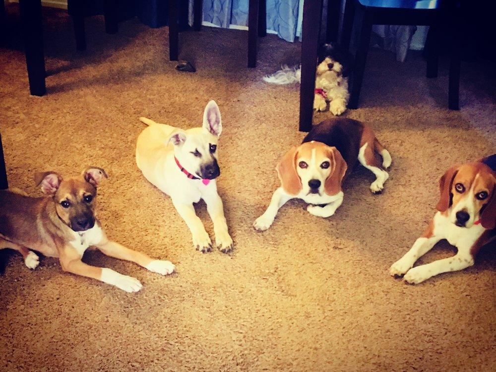 Puppy Boarding School 4