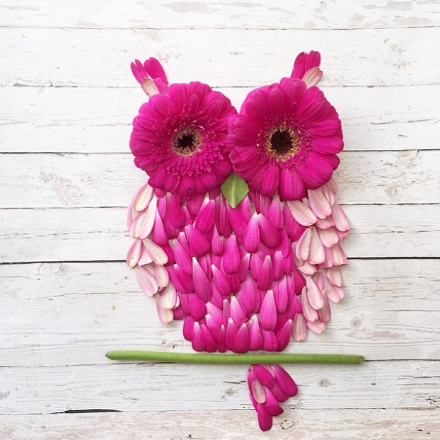 cute owl made from flowers and petals