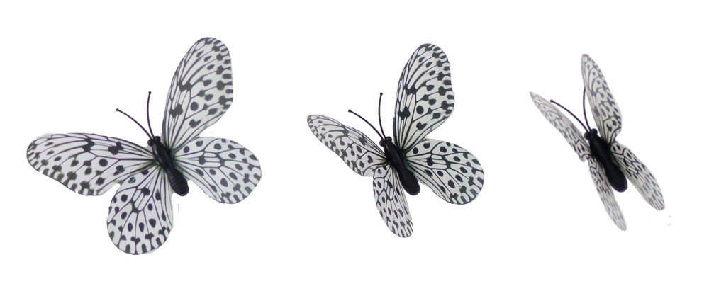 The different butterfly images I used to add motion to my animation