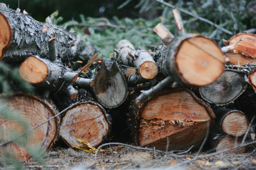 Image of cut logs, waiting for the Of Larks official launch announcement.