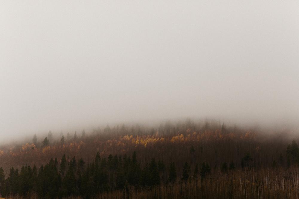 Image of waiting on God to act, tress disappearing in fog on Kenosha Pass.