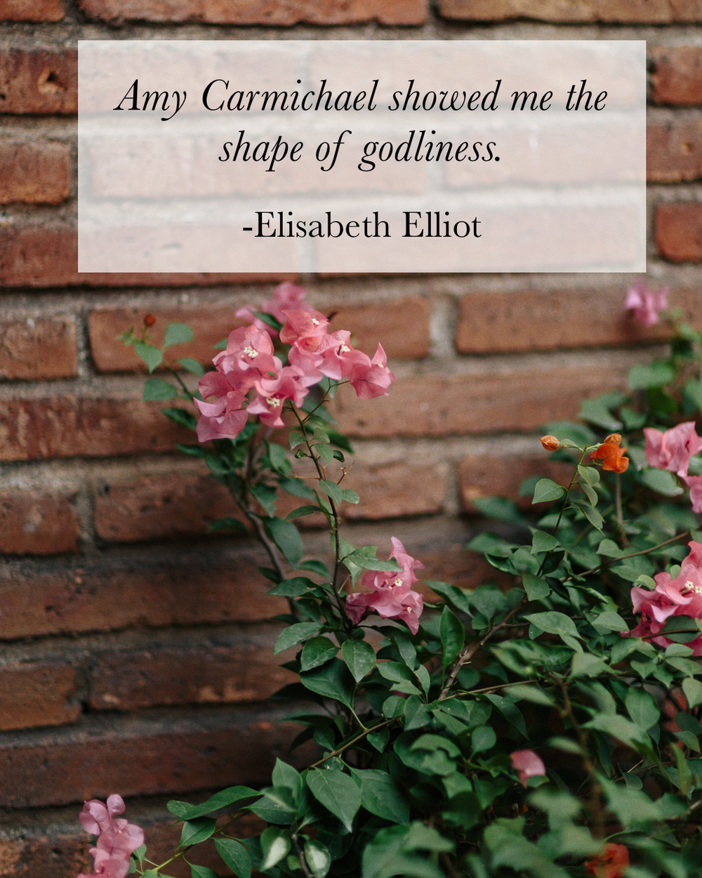 "Flowers growing next to a brick wall, quotation from Elisabeth Elliot speaking of Amy Carmichael, Christian woman and missionary: ""Amy Carmicahel showed me the shape of godliness."""