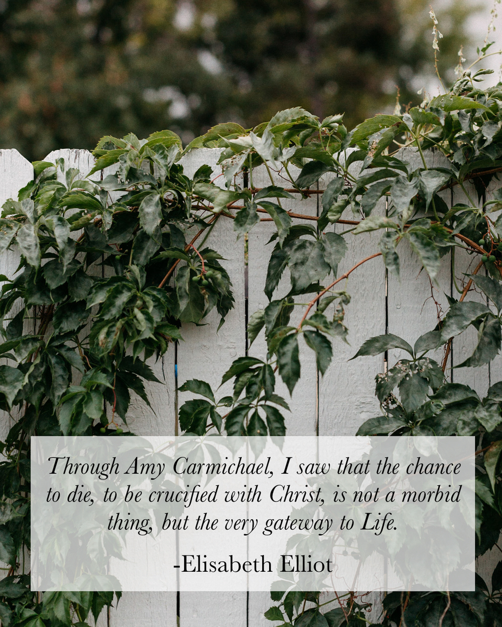 """Green vines growing next to a white fence. Elisabeth Elliot speaking of Amy Carmichael: """"Through Amy Carmichael I saw that the change to die, to be crucifed with Christ, is not a morbid thing, but the very gateway to Life."""""""