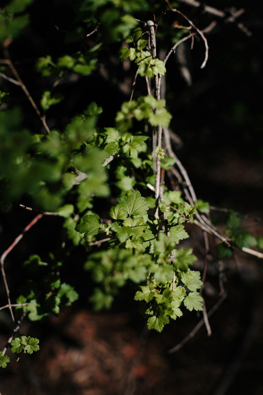 I am the true vine.