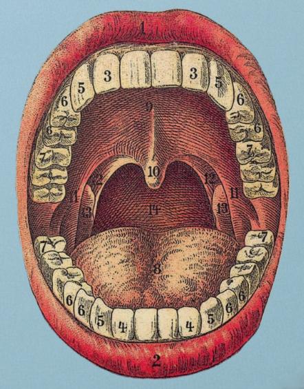 antiquemouth.jpg