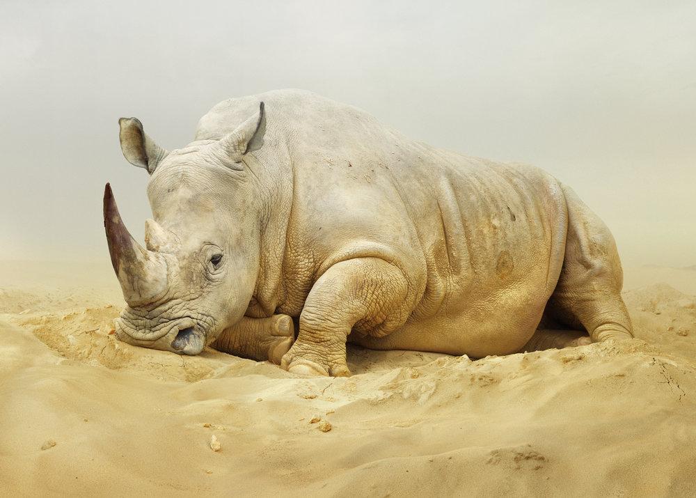 19_SJohan_#168 (Rhino).jpg