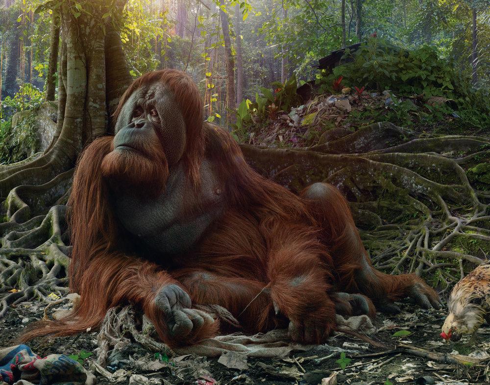 25_SJohan_#175 (Orangutang).jpg