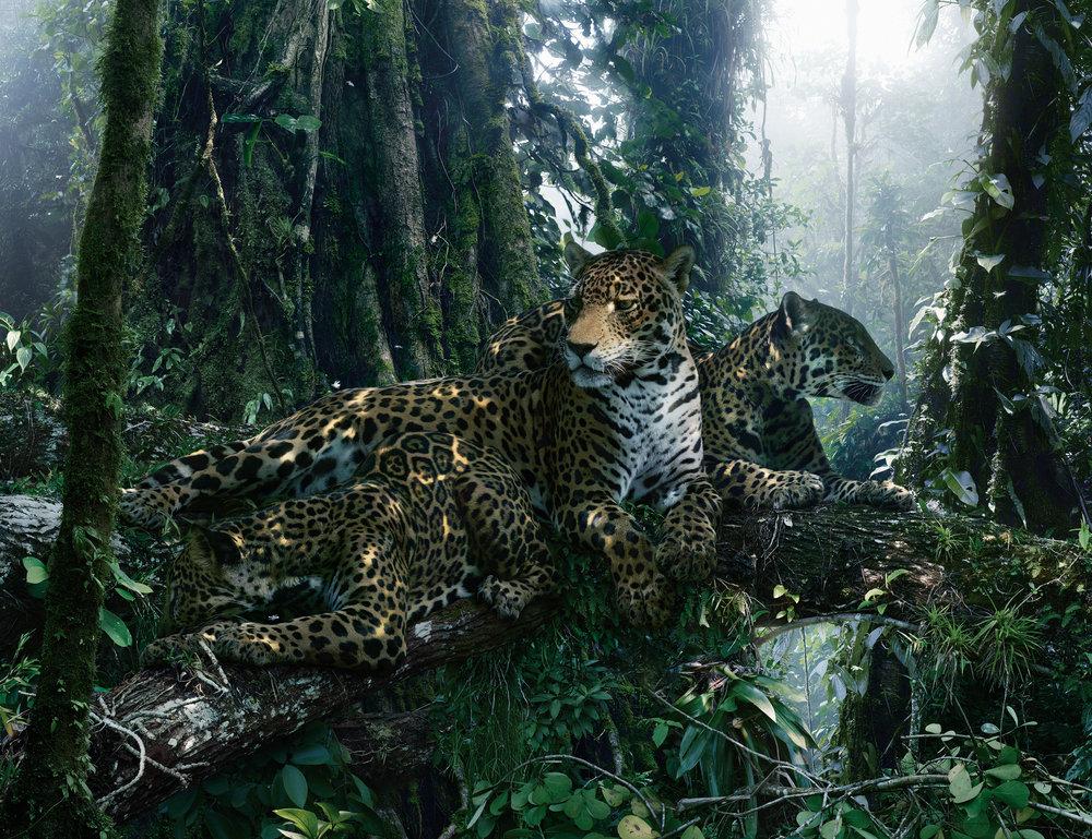 SJ183(jaguar).jpg
