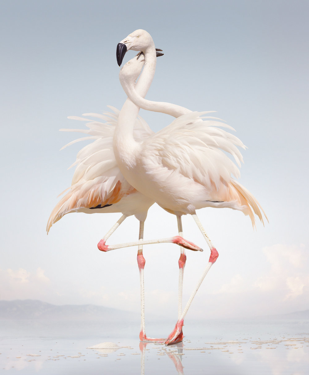 14_SJohan_#163 (Flamingo).jpg
