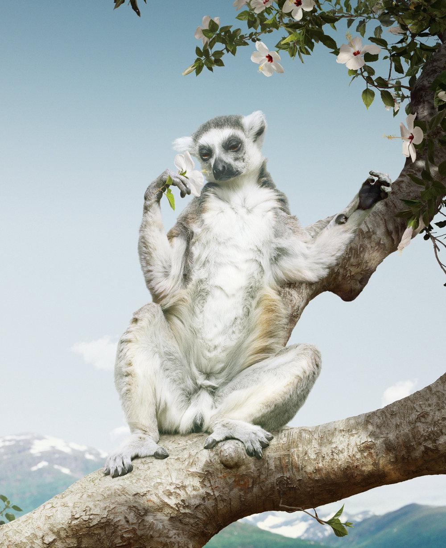 20_SJohan_#169 (Lemur).jpg
