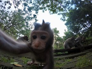 "Teaching monkeys the art of the ""selfie."""