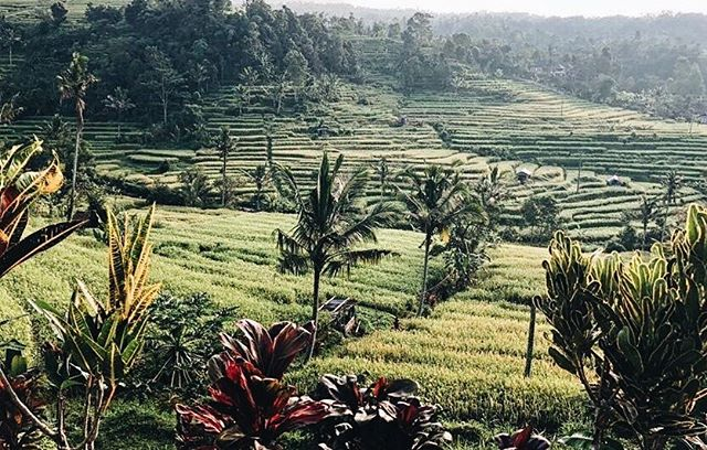 The endless rice fields of Bali and that golden light are a match made in heaven 🌿 Tag us in your favourite Bali pictures and we'll feature our favourites on our stories 💪✨