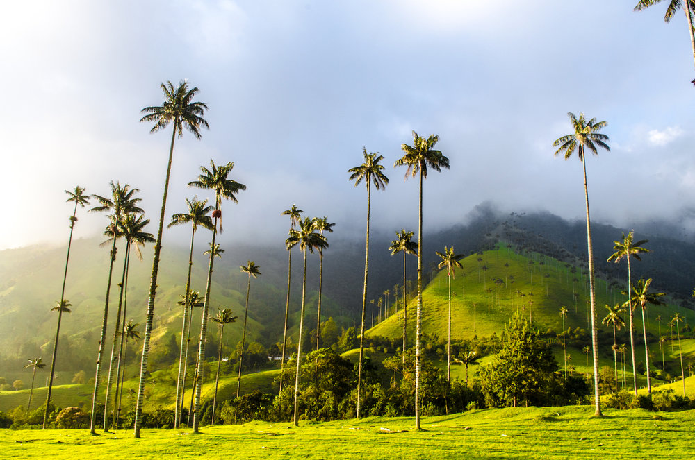 salento-cocora-sunrise-medellin-colombia-wifi-tribe-digital-nomad-retreat-remote-work-travel-program-2019-1119009716.jpg
