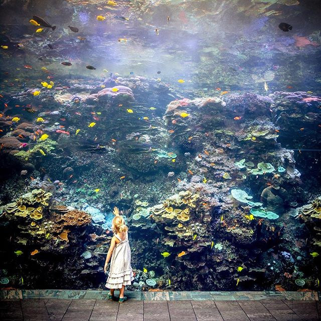 Mysteries of the Deep.  Aquarium, that is 😀. #gaaquarium #fishtank #wonder #whitedress