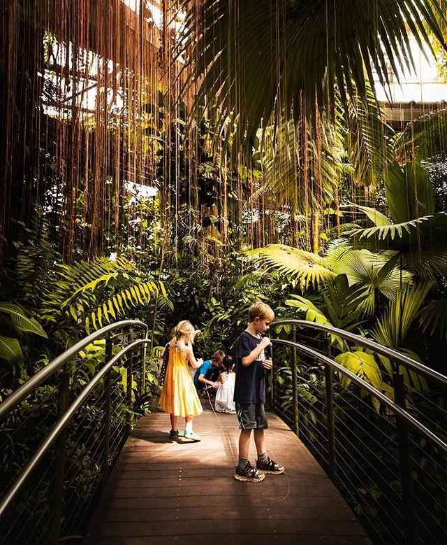Jungle canopy.  #botanicalgardens #atlbotanicalgardens #bridge #bigleaf #canon #canon2470mm