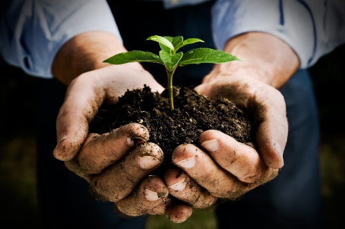Photo of hands holding soil with a small plant emerging