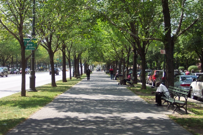 Wide, tree-lined sidewalk with benches and pedestrians next to street.