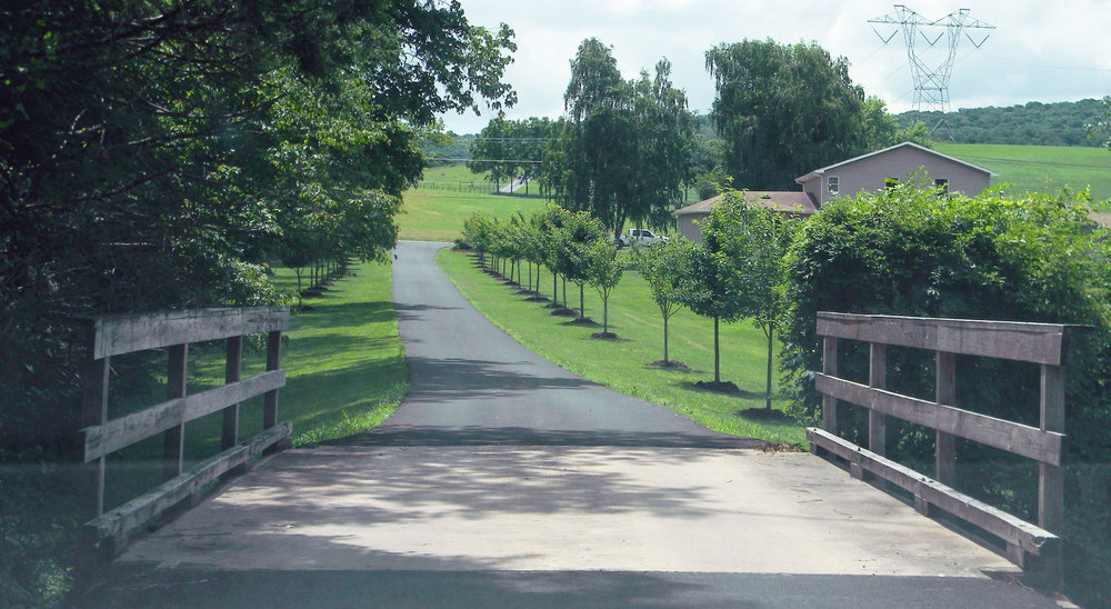 Country Lane - Copy.jpg
