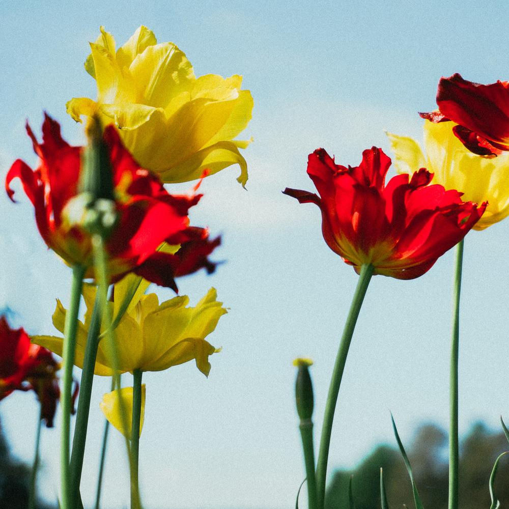 05-28-Flowers-3_LR edited_FB-2.jpg