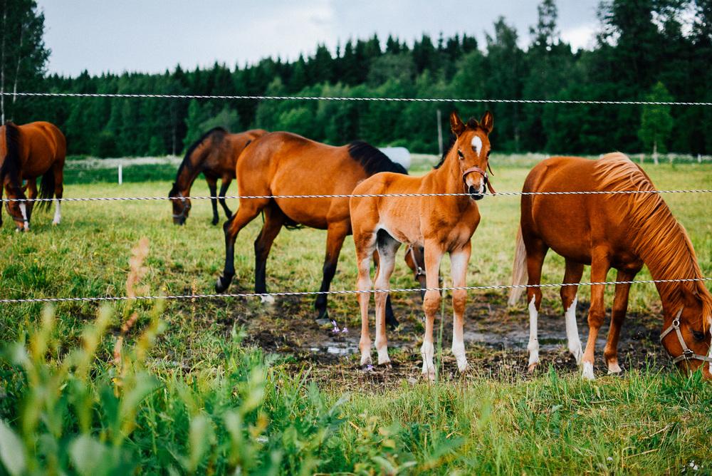 06-20-Mama-Katrin-horses (33 of 39)_LR edited_FB.jpg