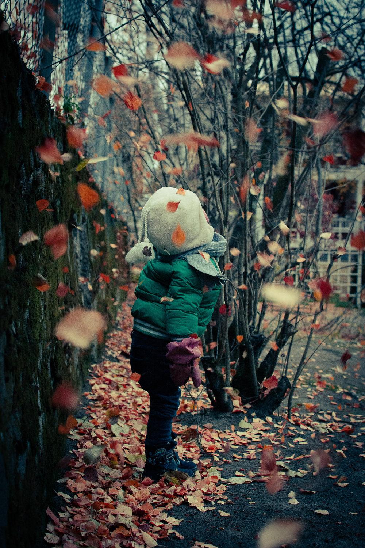 Swirling Leaves-Edit_LR edited_FB.jpg