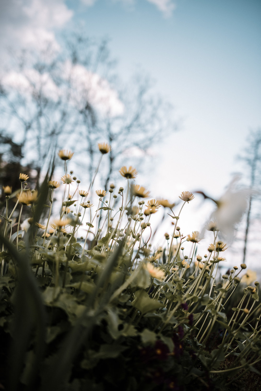 2017-05-31-Flowers-Schrebergarten-19_LR edited_web.jpg