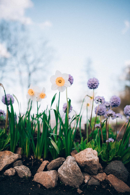 2017-05-31-Flowers-Schrebergarten-22_LR edited_web.jpg