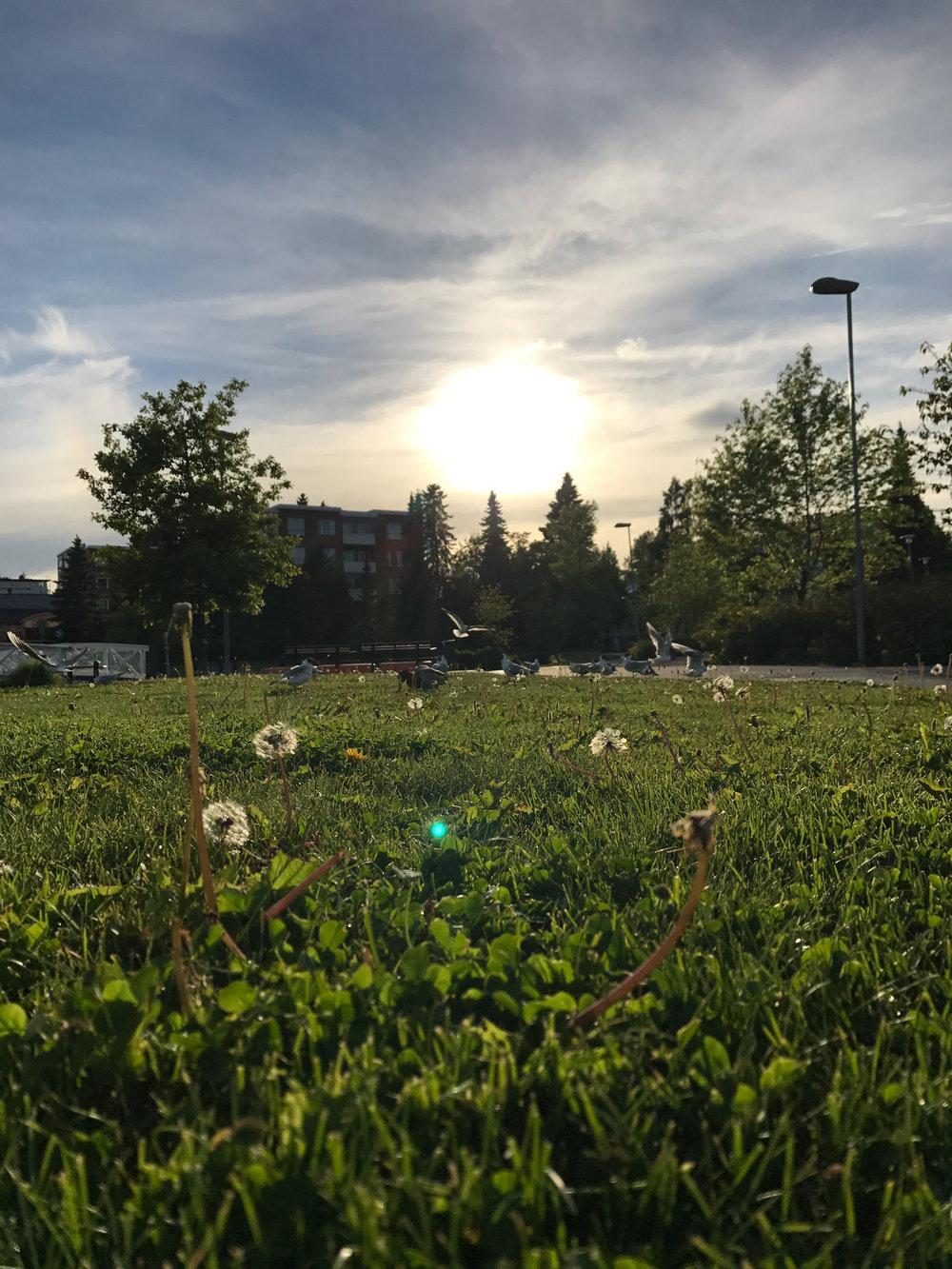 2017-06-26-evening-Vögel-75_LR edited_web.jpg