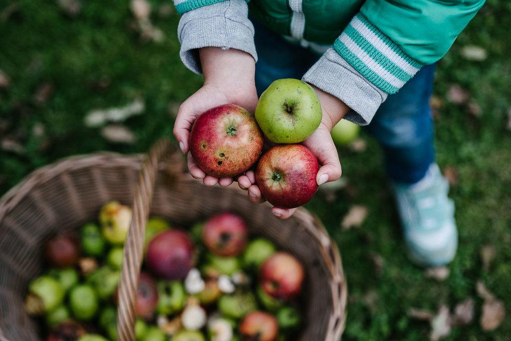 2017-09-29-apples-church-3_LR edited_web.jpg
