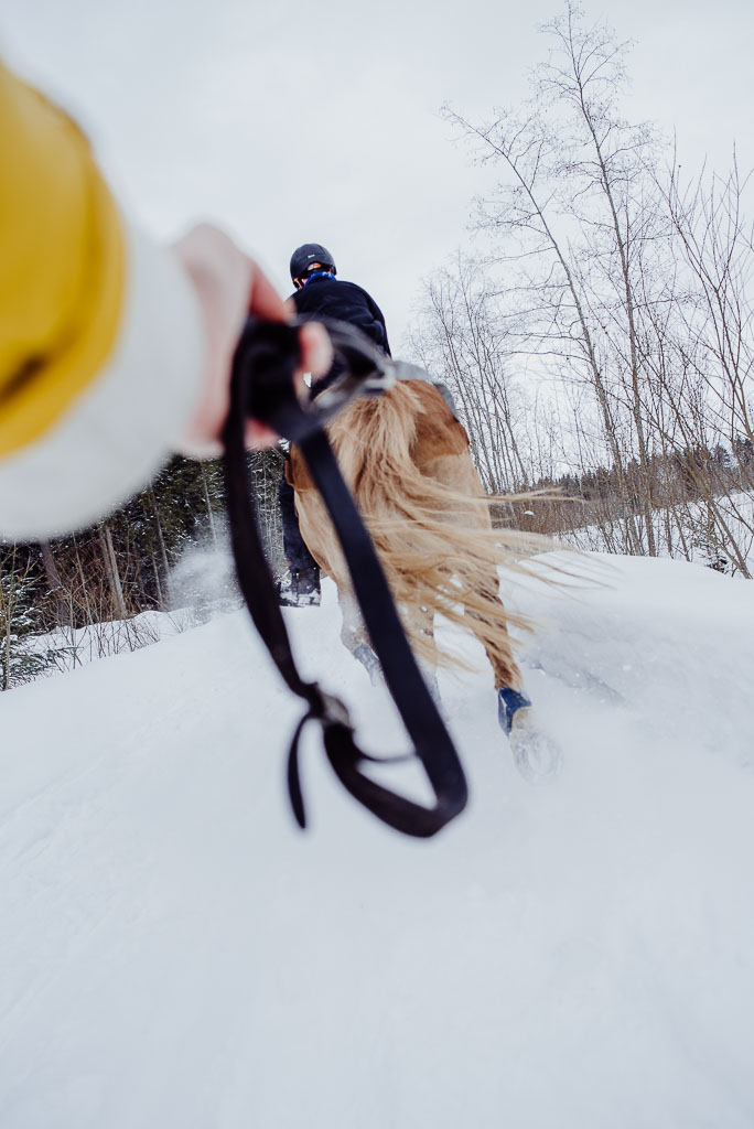 2018-03-24-horse-skiing-27_LR edited_web.jpg