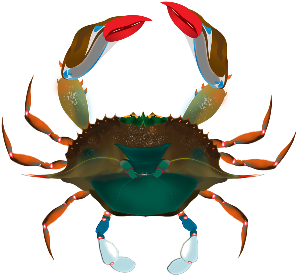 crab crop.png