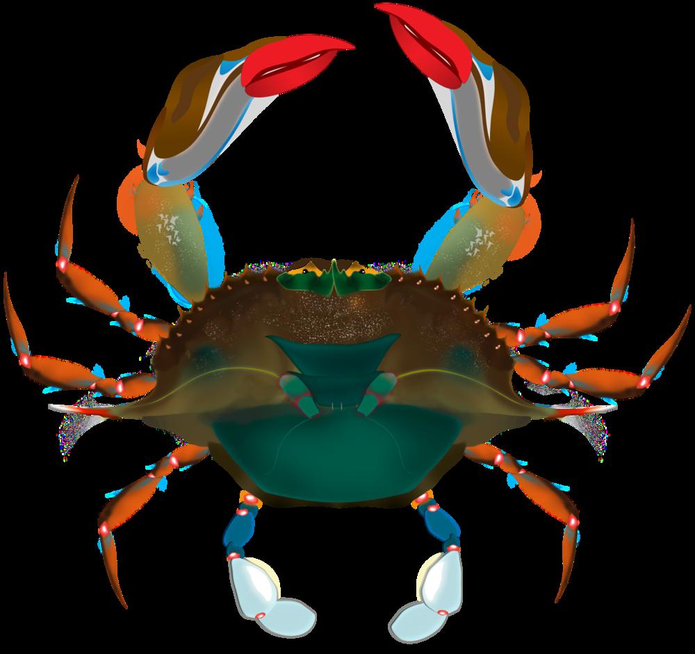 crab crop.png