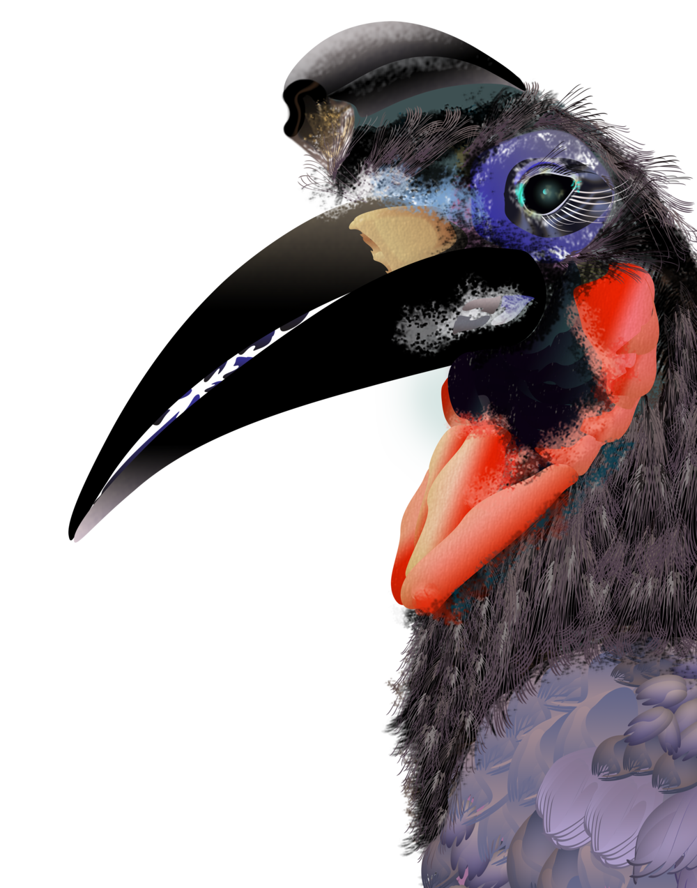 Abyssian Hornbill.png