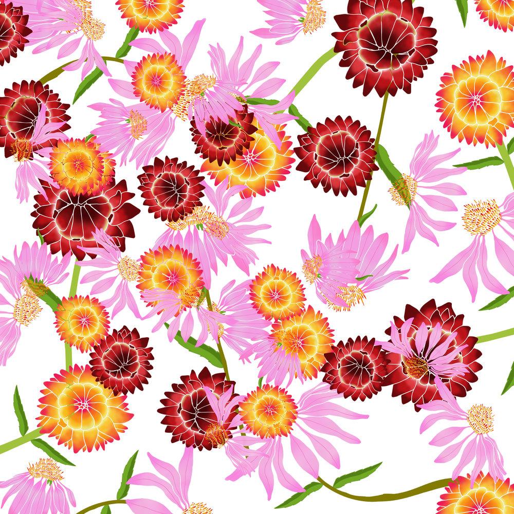 Strawflower / Echinacea