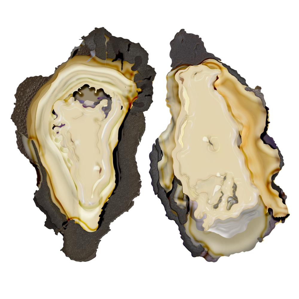 oyster mergedd.png
