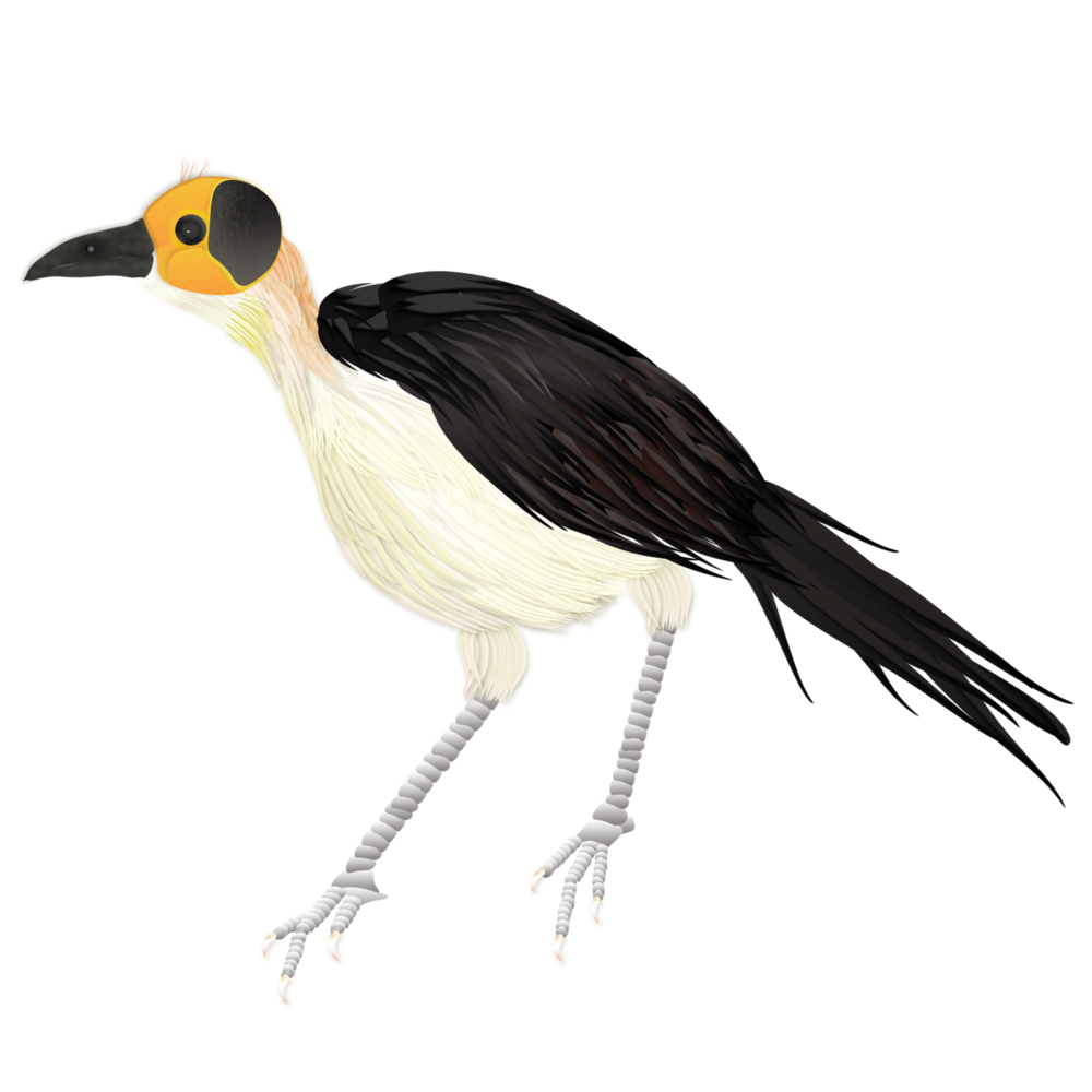 Picathartes merged with branch.png