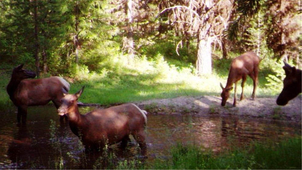 2015-07 - Elk Pond Party MFDC0690.JPG