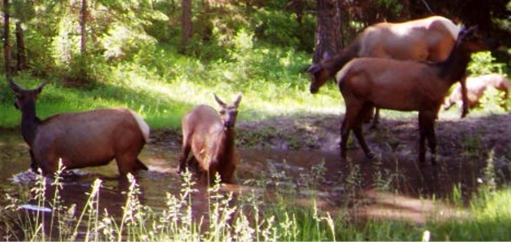 2015-06-06 - Elk Pond Party at SR 2.0