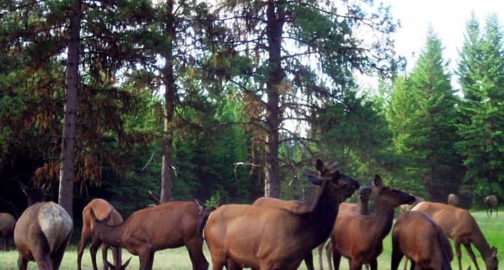 2016-06-12 - Elk Party at SR 2.0
