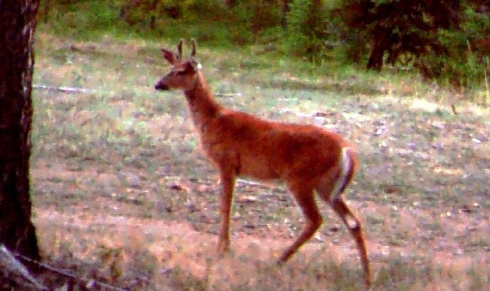2015-07-22 - Young Buck on the West Side of SR 2.0