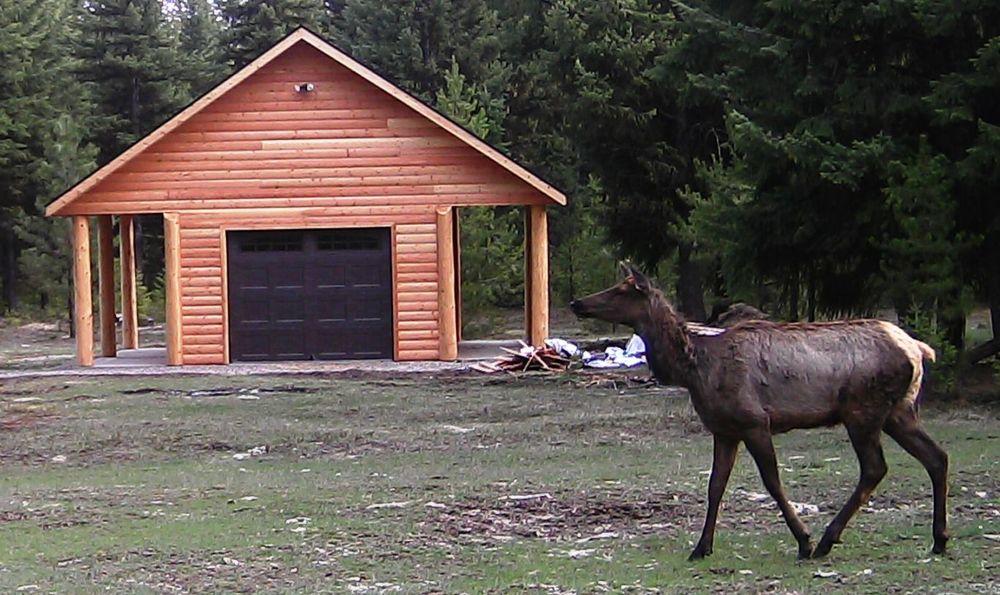 2016-04-12 - Elk at SR2.0 Shed