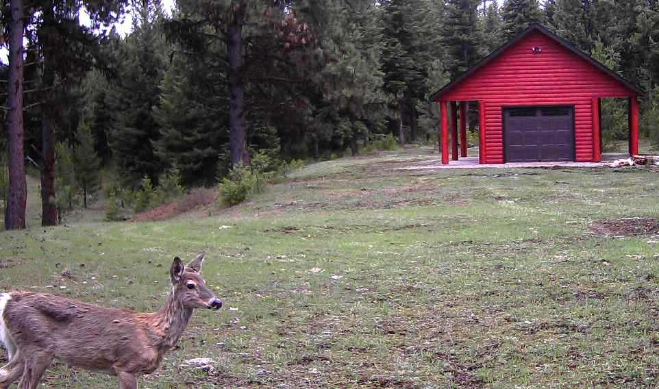 2016-04-25 - Deer Views Newly Stained SR2.0 Garden Shed