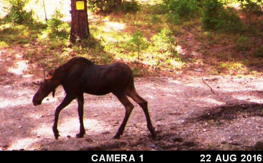 2016-08-22 - SR2 Moose