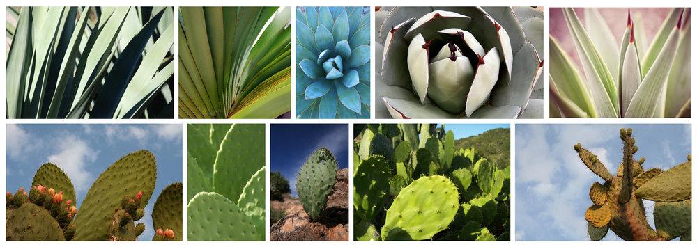 CAM Plants' Inspiration I Doctor Zamenhof's Moddboard