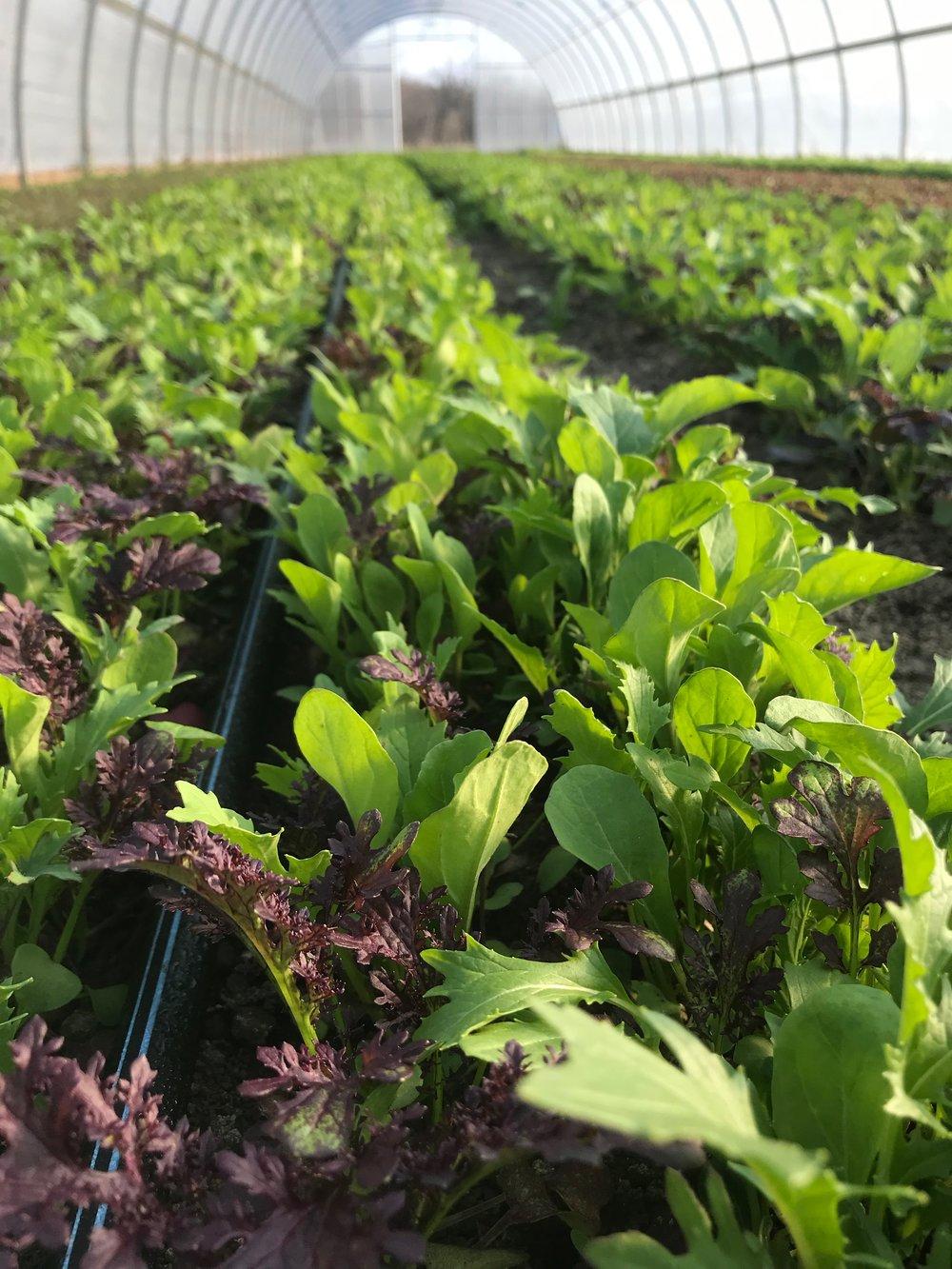 Juniper Hill Farms - Corporate CSA program is coming!