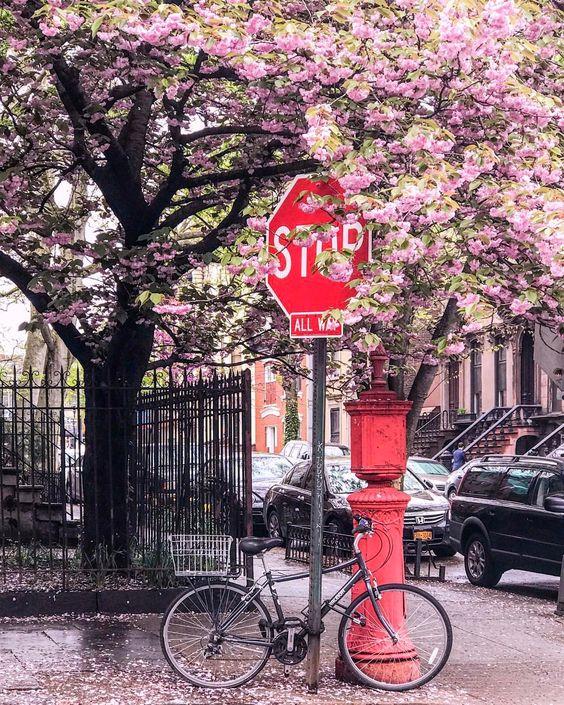 Newyork Blossoms.jpg