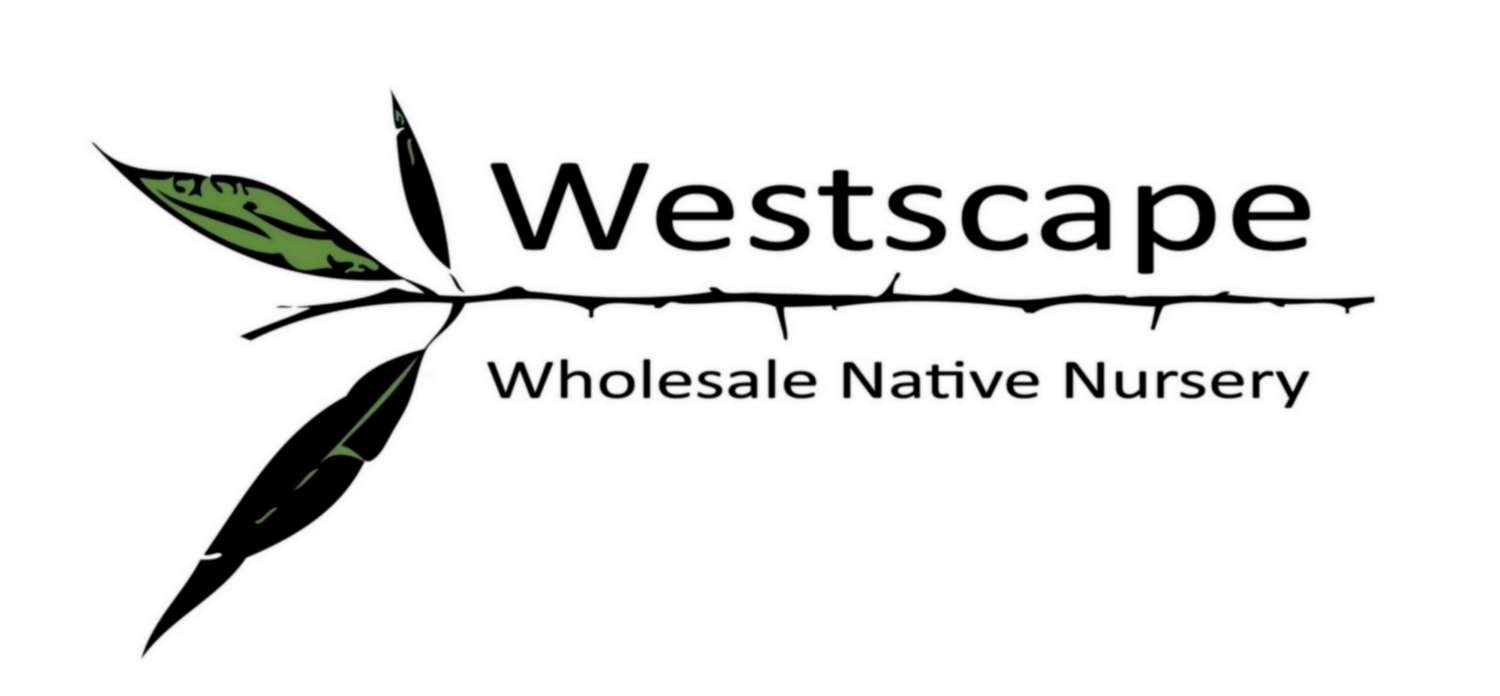 Westscape Wholesale Nursery