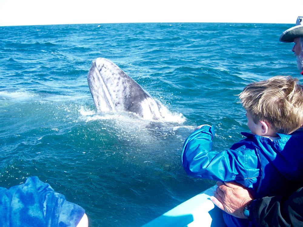 Whale watching expedition, San Ignacio lagoon, Baja