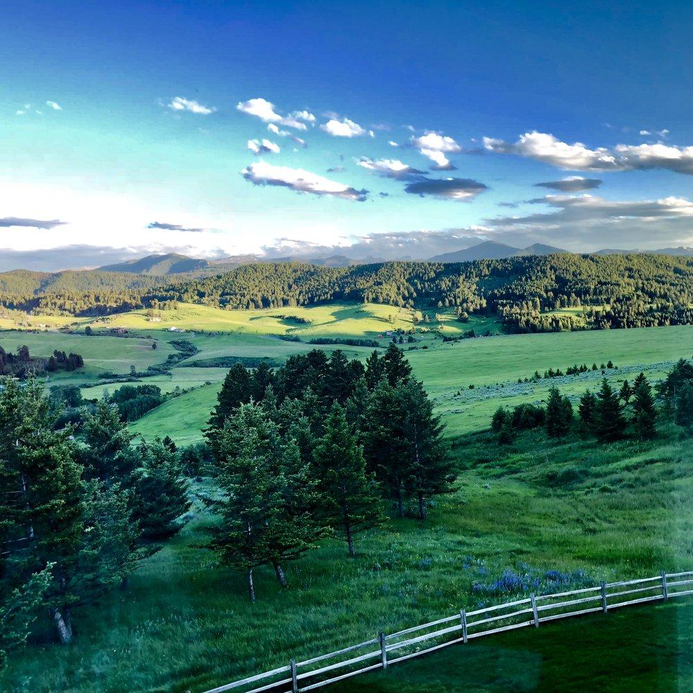 Our green yard in Bozeman, Montana